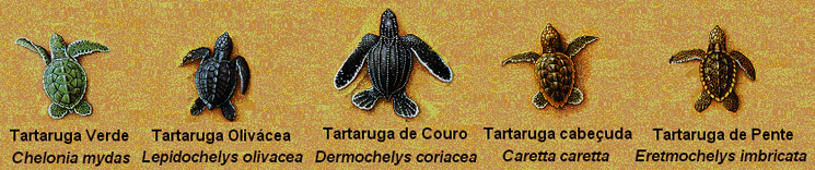 BrazilianTurttles